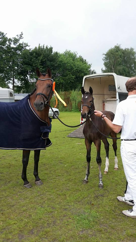 Lilly-Lena SB kampioen gelderland